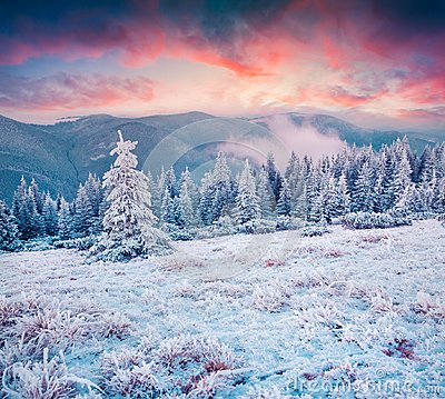 Free Amazing Winter Sunrise In Carpathian Mountains With Snow Cowered Stock Images - 103092504