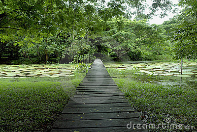 Amazon forest wood bridge