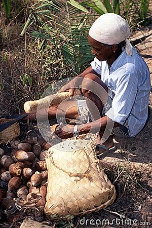 Free Amazon Indian Manual Labour Royalty Free Stock Photo - 5584545