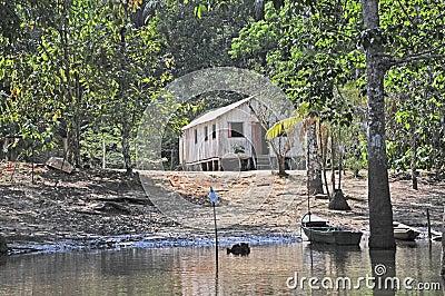 Amazon Jungle Habitation