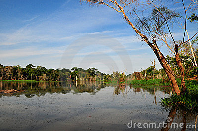 Amazon Jungle Typical View (The Amazonia)