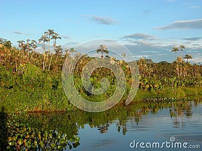 Amazon lake scenery