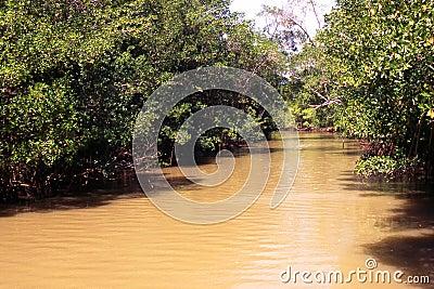Through the Amazon rainforest