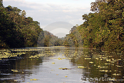 Amazon river and jungle