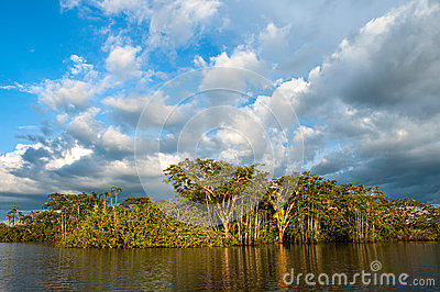 Amazonian rainforest. Laguna Grande, National Park Cuyabeno. Ecu