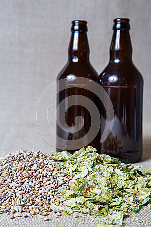 Amber Malt and Summer Hops brewing