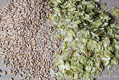 Amber Malt and Summer Hops image