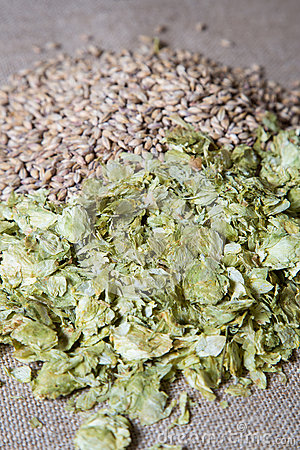 Amber Malt and Summer Hops on muslin