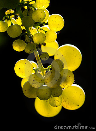 Amber wine grapes