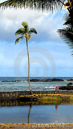 Ambiance on the Big Island