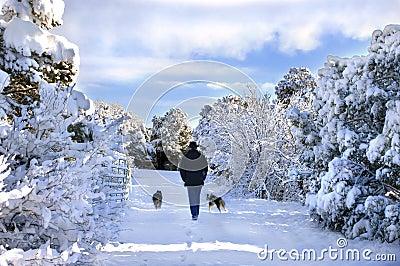 Amble through Winter Wonderland