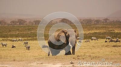 Amboseli elli 3,04