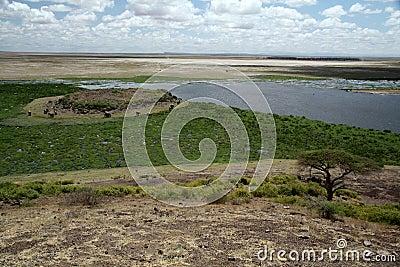 Amboseli Swamp