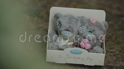 Ame los conceptos de oso de peluche en caja de regalo del corazón en la madera almacen de video