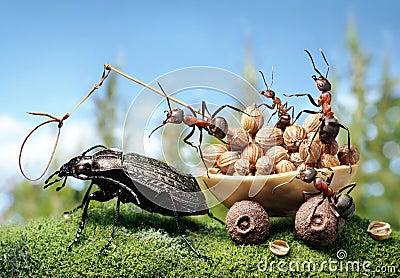 Ameisen, welche die Wanze, Ameisengeschichten vorspannen