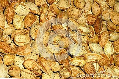 America almond nut