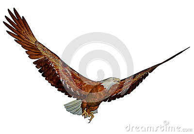 bald eagle render by - photo #18