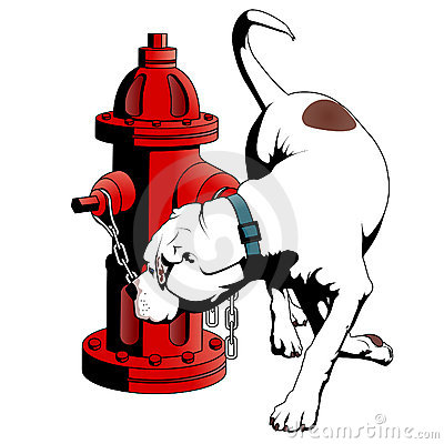 American Bulldog at the fire hydrant