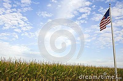 American Cornfield