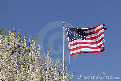 American Flag and Flowering Dogwood
