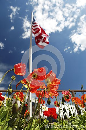 Free American Flag On Poppy Fields, USA Memorial Day Concept Stock Images - 116433954