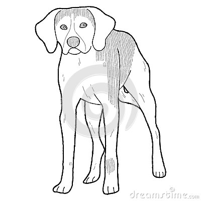 American Foxhound Vector Illustration