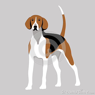 American foxhound dog vector illustration color flat style Vector Illustration