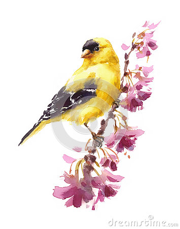 Free American Goldfinch Bird On The Branch With Flowers Watercolor Fall Illustration Hand Painted Royalty Free Stock Images - 81499199
