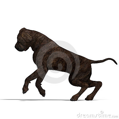 American Mastiff Dog. 3D rendering with clipping