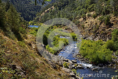 American River Nature Scene