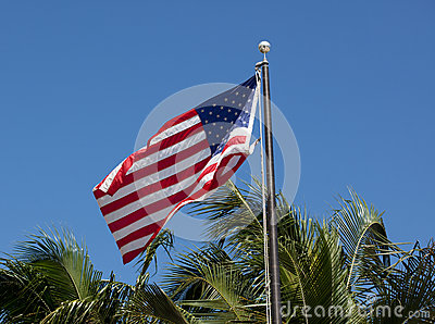 American Stars & Stripes Flag on Palm Background