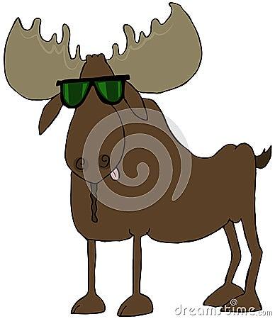 Amerikaanse elanden die zonnebril dragen