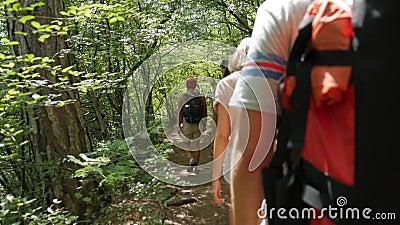 Amigos novos do caminhante que andam em um trajeto em Forest Rear Back View de adolescentes Trekking no passeio na montanha com t vídeos de arquivo