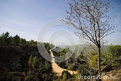 Aminadav Forest in Central Israel