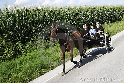 Amish Buggy Editorial Image