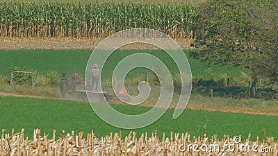 Amish Family Farm Gromadzi to Corn Crop zbiory wideo
