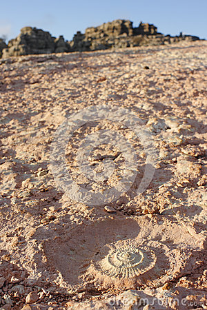 Ammonite Fossil in Torcal of Antequera