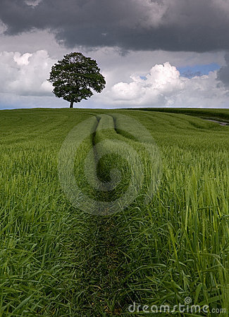 Free Among The Fields Of Barley Royalty Free Stock Photography - 129157