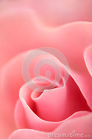 Amour romantique Rose