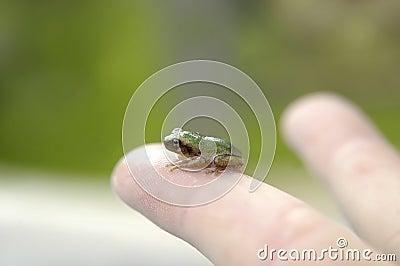 Amphibian Baby