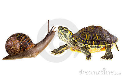 Amphibian turtle and snail love