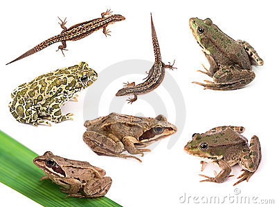 Amphibians and reptiles isolated on white