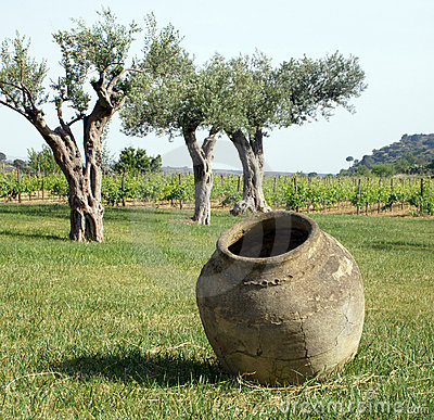 Free Amphora Jar And Wine Plant Stock Photography - 5298212