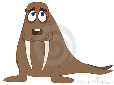 Amusing walrus