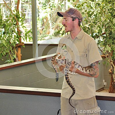 Free An Animal Keeper With A Python Royalty Free Stock Images - 91472819
