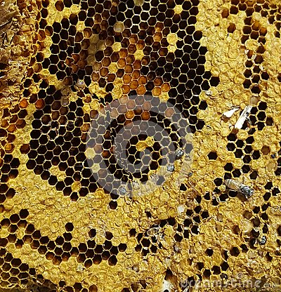 Free An Old Hive Stock Image - 115747311