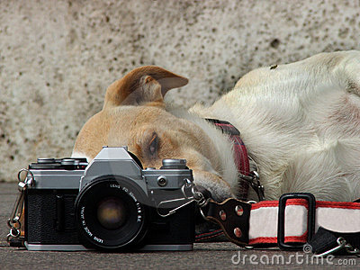 Analog Photography Lover