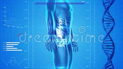 Analysis of human body. Video of Analysis of human body vector illustration