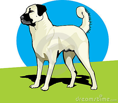 Anatolian Sheperd Dog color