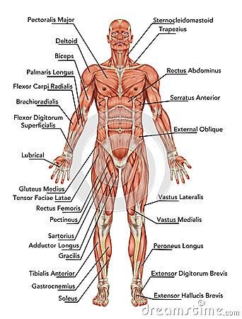 Querer Aprender Medicina: ANATOMIA